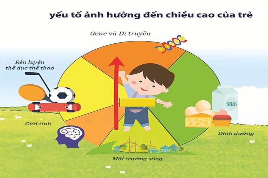 yeu-to-anh-huong-den-chieu-cao